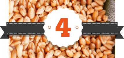 Recetario a base de cereales y otros granos